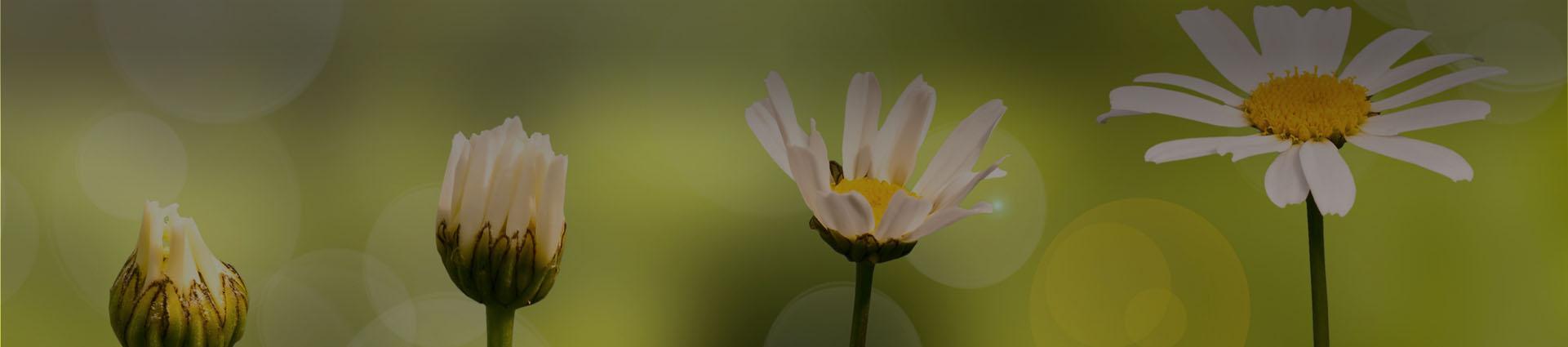 baner kwiaty